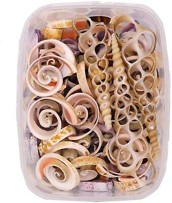 Seashells - Cut Shell Pack 170 Grams - Shells For Crafts Supplies And Miniature