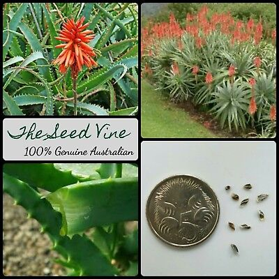 20+ KRANTZ ALOE SEEDS (Aloe arborescens) Better than ALOE VERA Medicinal