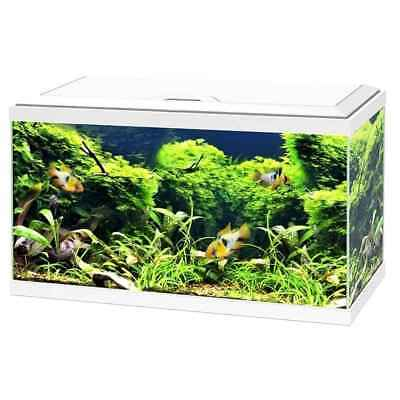 Aquarium 60 LED - Blanc - Ciano