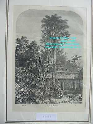 48438-Asien-Asia-Indien-India-Palmen-Andaman-Palm-TH-1870