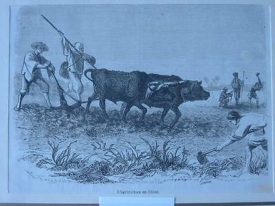 87546-Asien-Asia-China-Agriculture-Landwirtschaft-T Holzstich-Wood engraving