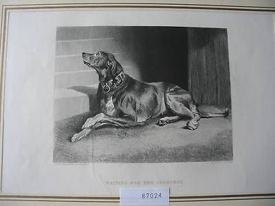 87024-Hunde-Dogs-Waiting for the Countess-nach Landseer-Stahlstich-engraving