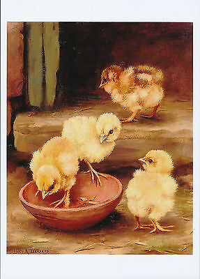 Leavers Animal Print Farm Chicken NEW ARRIVALS Baby Chicks Feeding in Barnyard