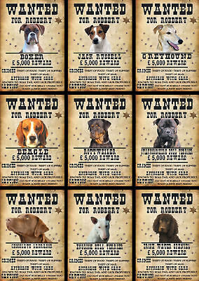 Beware Of The Dog Signs Wanted Various Breeds Set A