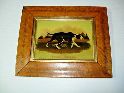 SPANISH POINTER Hunting Dog English Reverse Painting on Glass by J Harding