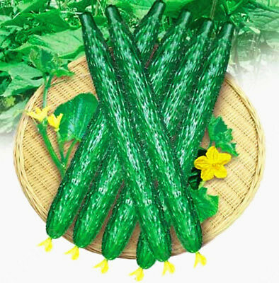 100 pcs Of Cucumber,Cuke Seeds,Green Vegetable Seeds