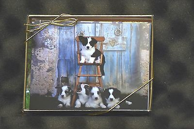 Cardigan Corgi Puppies Note Cards