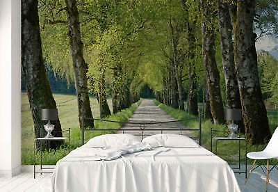 Road Trees Spring Photo Wallpaper Wall Mural (FW-1095)