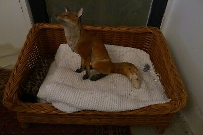 Nichola Theakston signed Limited Edition Art Sculpture of a Fox