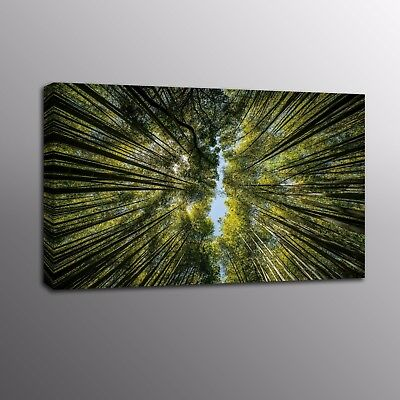 Landscape Deep Forest Giclee HD Green Canvas Prints Painting Wall Art Pictures