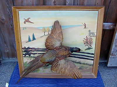 Rare Ringneck Pheasant Taxidermy Bird Mount Mounted On A Large Orig Oil Painting