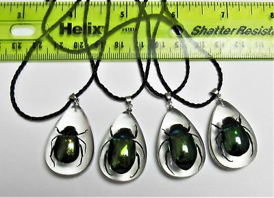One Truly Fashionable Real Green Beetle Pendant Necklace Gifts FAST FROM USA