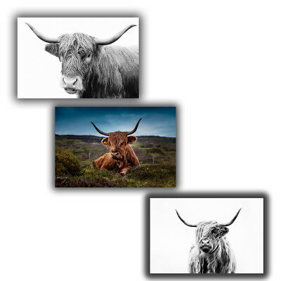SCOTTISH HIGHLAND COW animal art wall poster 60x90 cm silk print for home decor