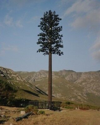 "Robert Voit, ""Mosselrivier Hermanus, South Africa 2006"" aus New Trees, handsign."