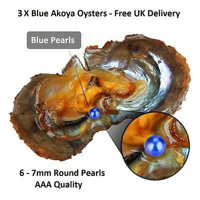 3 Akoya Oysters With 6-7mm Round Blue Pearl Inside - Pearl Party Gift