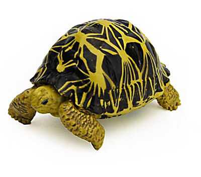 Japan Colorata Reptile Radiated Tortoise Animal Miniature Realistic Mini Figure