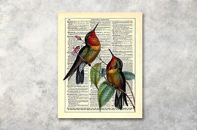 "16x20"" Old Book Colored Bird Modern Art Poster Prints Wall Decor Canvas Painting"