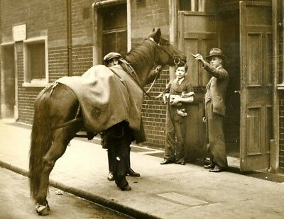 Horse traitment Stage Actor Theater A Night Like This théâtre cheval Photo 1920'