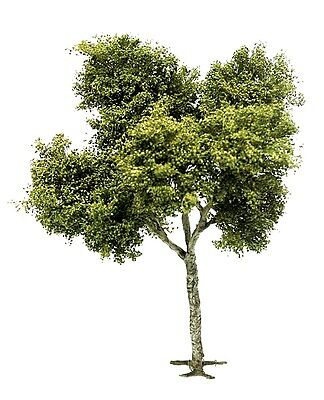 1/35 scale realistic handmade model tree grasses leaves. TNT-003