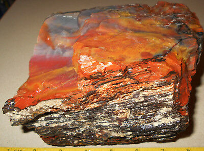 Arizona Rainbow Petrified Wood    Rough 7 Lbs  Gift/ Garden Decor B60