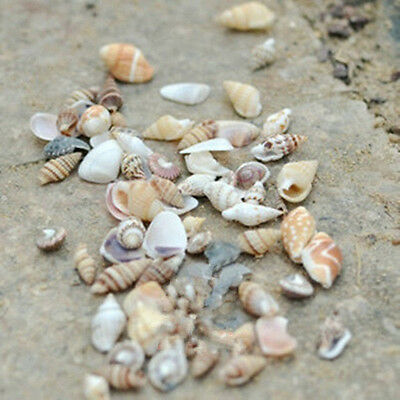 1 Bag DIY Mixed Sea Shells Shell Craft Aquarium Nautical Decor Gift Ornaments