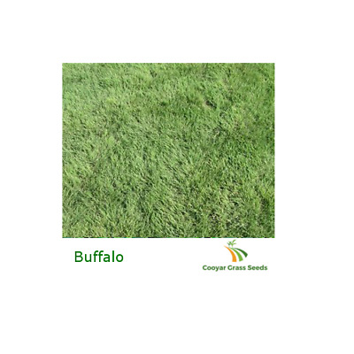 Buffalo Grass Seed - Pure 100% - 1kg Lawn