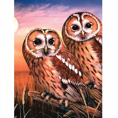 Royal & Langnickel Tawny Owls - Medium Paint By Numbers