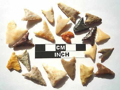 20 x Triangle Style Neolithic Arrowheads - 4000BC - (991)