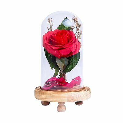 Beauty And The Beast Enchanted Rose Flower In Glass Dome Valentines Day Gift NEW