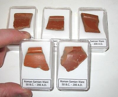 Roman Samian Ware Terra sigillata pottery shard w/ rim Display Non UK Find COA
