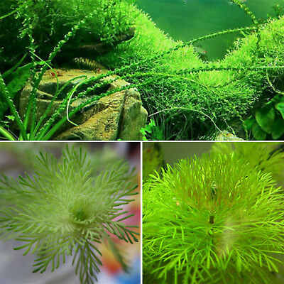 1000X Bulk Aquarium Grass Mixed Seed Water Aquatic Home Fish Tank Plant Decor S3