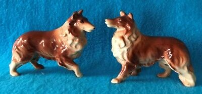 Two Japan Collie Dogs