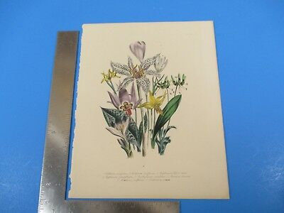 Antique Hand Colored Assorted Flowers Drawing Lithograph Plate L537