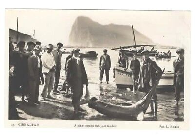RPPC A Giant Sword Fish just landed Gibraltar c1928 Photographed by L Roisin