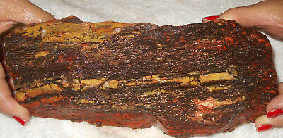 Arizona Rainbow Petrified Wood Nazlini  Rough  Gift/garden Decor 4 Lbs  F178