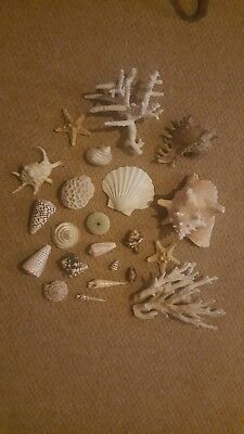 Collection of rare shells and corals