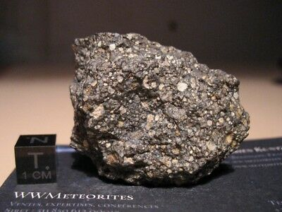 Meteorite NWA 11533 - Carbonaceous Chondrite - CV (Oxidized sub-group)