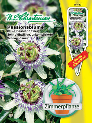 Passion Flower - Passiflora caerulea, House Plant Ranker, ca.20 Seeds 50433
