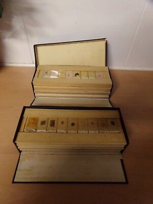 Antqiue Microscope Slides