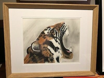 Original Framed Yawning Tiger Portrait In Polychromo Pencil And Charcoal