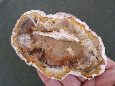 Natural Petrified Wood Fossil Crystal Polished Slice Madagascar 164g MHP7144