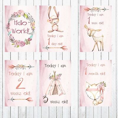 Baby Milestone Cards, 4x6 Photo Prop, Animals, Age Cards, February Special Only.
