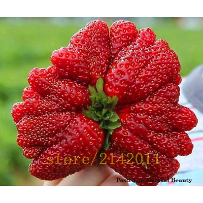 200 Giant Strawberry Seeds Edible For Home Garden Seed Fruits Plants SALE E0I7