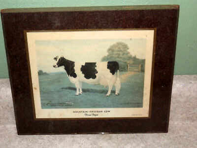 Vintage Holstein-Friesian Cow True Type Plaque Farm Cattle Judging Collectible