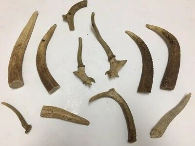 Lot of 11 pc Deer Antler Horn Stag Knife Handle for Crafting Craft Décor Jewelry