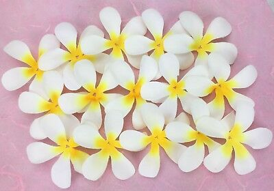 50 Fabric 6cm FRANGIPANIS Craft/Wedding/Hair Decorations/Table Scatter WHITE