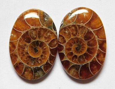 Natural Ammonite Cabochon Loose Gemstone Match Pair Collection