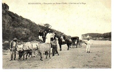 (S-94813) GUADELOUPE - GP-POINTE A PITRE CPA      PHOS ed.