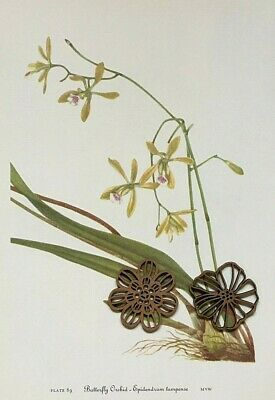 Vtg Botanic Art Print Wildflower Mary Walcott ORCHID TROPICAL - SEE VARIETY