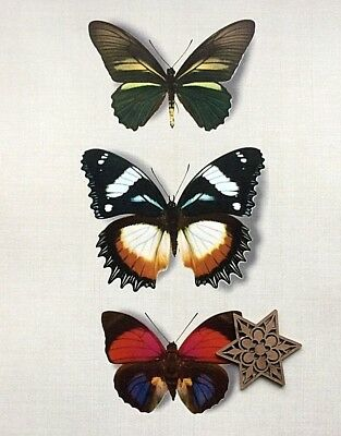 Vtg 1970 Art Print Ropro Bookplate Butterfly Taxonomy Naturalist * * SEE VARIETY